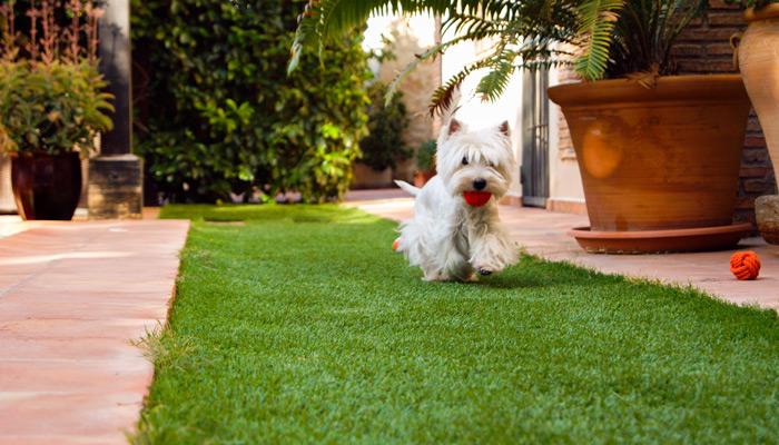 Perro en jardin cesped artificial