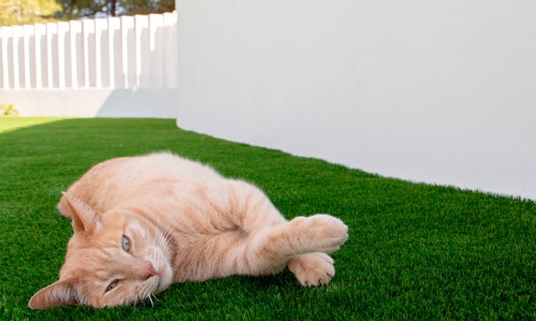 Elegir césped artificial para mascotas