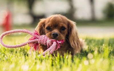 Are artificial turf and pets compatible?