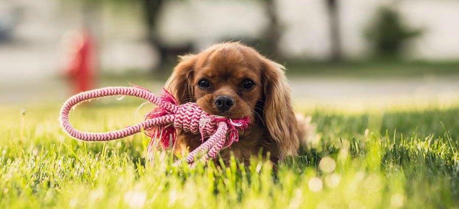 Las mascotas dejarán de ser cosas y no serán susceptibles de embargos o herencias
